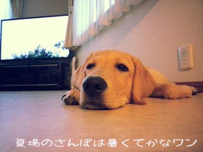 夏場のさんぽ.jpg